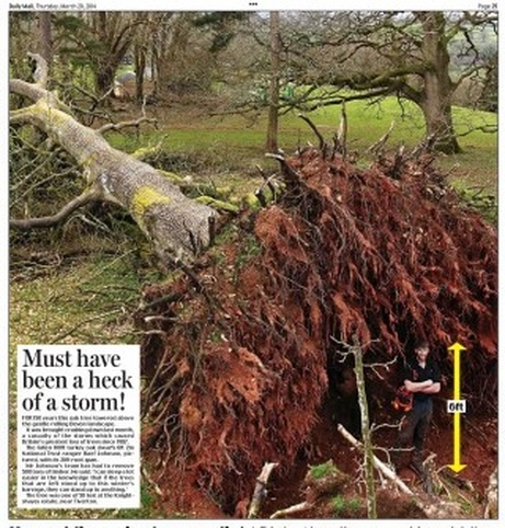 oak tree daily mail march 20