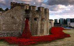 =tower poppies